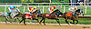 RB Madymosielle winning The Buzz Brauninger Arabian Distaff (grade 1) at Delaware Park on 9/3/16