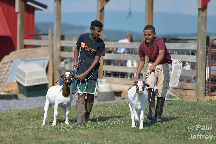 Resettled refugee youth walk their goats on a farm in Linville, Virginia, on July 18, 2017. Resettled in the area by Church World Service, they are preparing to show sheep and goats in a county fair.<br /> <br /> Photo by Paul Jeffrey for Church World Service.