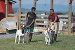 Robel Haile  and Mangstab Gebray, resettled refugees from Ethiopia and Eritrea, respectfully, brace their goats on a farm in Linville, Virginia, on July 18, 2017. Resettled in the area by Church World Service, they are preparing to show sheep and goats in a county fair.<br />