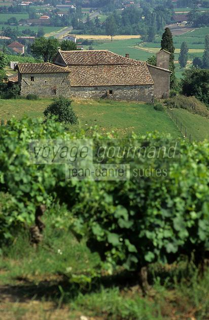 Europe/France/Midi-Pyrénées/81/Tarn/ Gaillac:Le vignoble AOC Gaillac