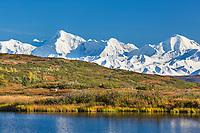 Bull caribou and the Alaska Range, Denali National Park, Interior, Alaska