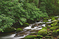 Roaring Fork Creek, Great Smoky Mountains National Park, Tennessee