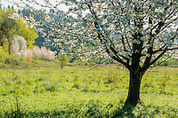 Bitter Cherry and meadow