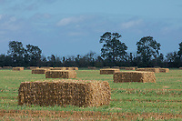Bales in field - Lincolnshire, September