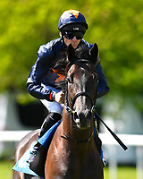 """Dive for Gold ridden by Robert Havlin goes down to the start of The Willton Homes """"Confined"""" Novice Stakes (Colts & Geldings)  during Afternoon Racing at Salisbury Racecourse on 17th May 2018"""