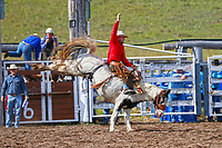 Rodeo_Saddle Ride