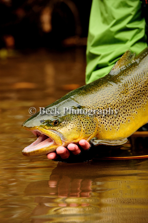 FALL FLY FISHING 2012 PA