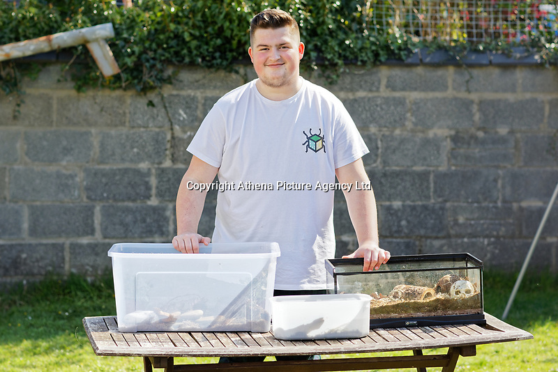Cameron Reardon who is breeding exotic insects, at his home in Llanelli, Wales, UK. Thursday 11 April 2019