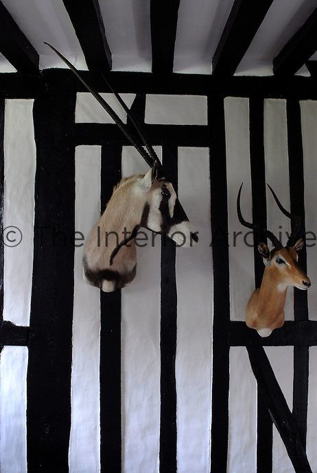 Hunting trophies such as these antelope heads are displayed on nearly every wall of the house