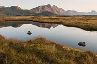 Autumn mountain reflection in moorland ponds, Vestvågøy, Lofoten Islands, Norway