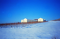 The Disznoko winery and vineyard in Tokaj under snow in winter. . The Disznók? winery is owned by AXA Millesimes, a French insurance company. Disznoko means pig's head since a big rock in the vineyard supposedly looks like that. The new winery is impressive and a vast amount of money has been invested. Credit Per Karlsson BKWine.com