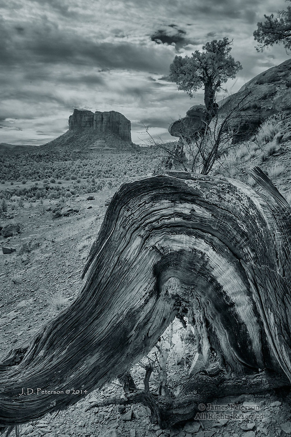 Juniper Trunk and Courthouse Rock