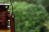 A spider's web in the rain, Chipping, Preston, Lancashire.