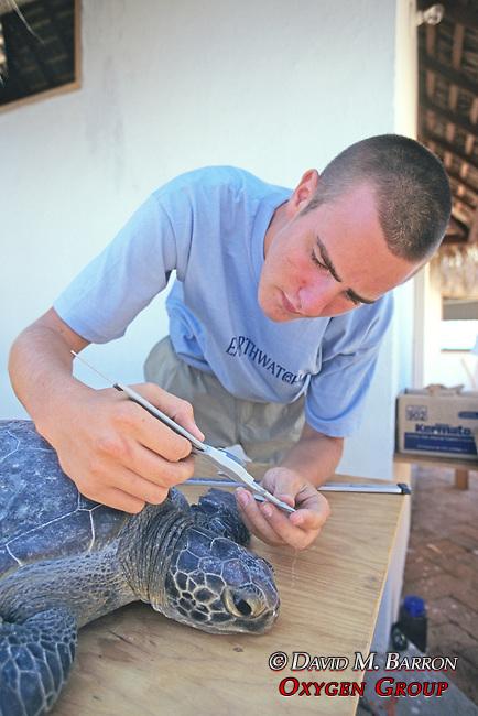 Ryan Horan Measuring Black Sea Turtle