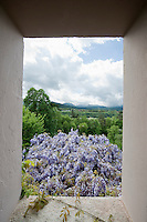 A stunning view of Wisteria flowers in full bloom from a high window of an 18th century Italian country house