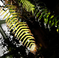 Tropical Rainforest Glasshouse (formerly Le Jardin d'Hiver or Winter Gardens), 1936, René Berger, Jardin des Plantes, Museum National d'Histoire Naturelle, Paris, France. Detail of Epiphytes plants seen against the glass and metal structure of the Art Deco glasshouse in the midday light.