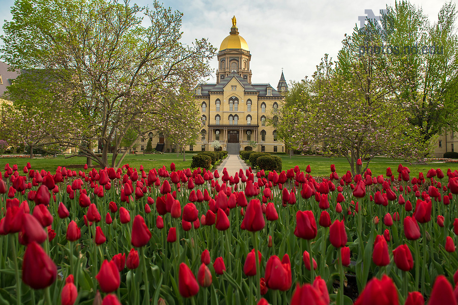 May 9, 2018; Main Building, spring 2018. Photo by Barbara Johnston/University of Notre Dame