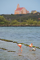 IT- Flamingo Sanctuary Taxi Max Curacao Tour during HAL Koningsdam S. Caribbean Cruise, Curacao 3 19