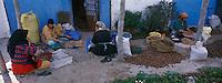 """Afrique/Maghreb/Maroc/Env d'Essaouira : Coopérative"""" Ajdigue Tadzi"""", les femmes enlèvent la pulpe des fruits pour extraire l'amande et faire l'huile d'Argan"""