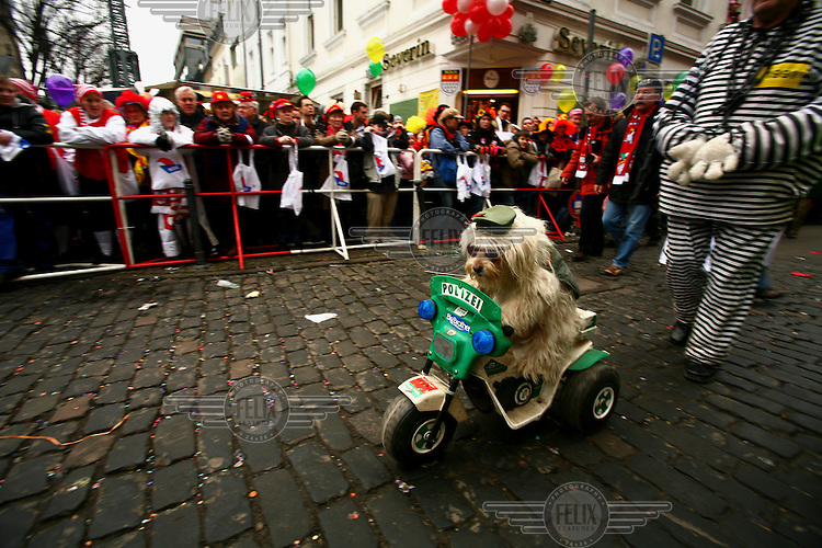 A dog rides a toy police bike through the streets of Cologne during the annual winter carnival.