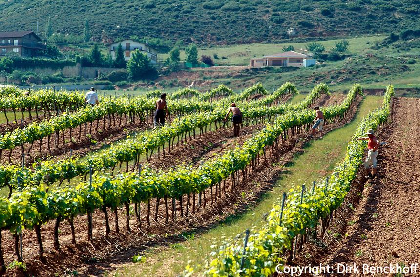Spanien, Navarra, Weinberge bei Villamajor de Monjardin