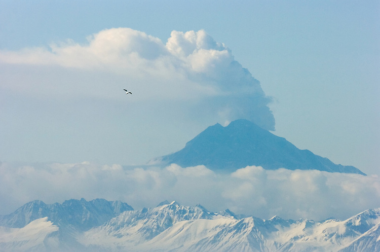 A gull flies over Cook Inlet as Mount Redoubt emits ash and steam into the atmosphere about 50 miles from Kenai, Alaska, during the volcano's eruptive period in 2009. Ash clouds from the volcano disrupted international and domestic air travel.