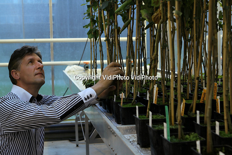 Foto: VidiPhoto..WAGENINGEN - Portret van Henk Schouten van Plantenveredeling Wageningen Universiteit (WUR). Schouten heeft een techniek ontwikkeld om appelgenen toe te voegen aan een ander appelras, waardoor de vruchten resistent worden tegen ziekten.