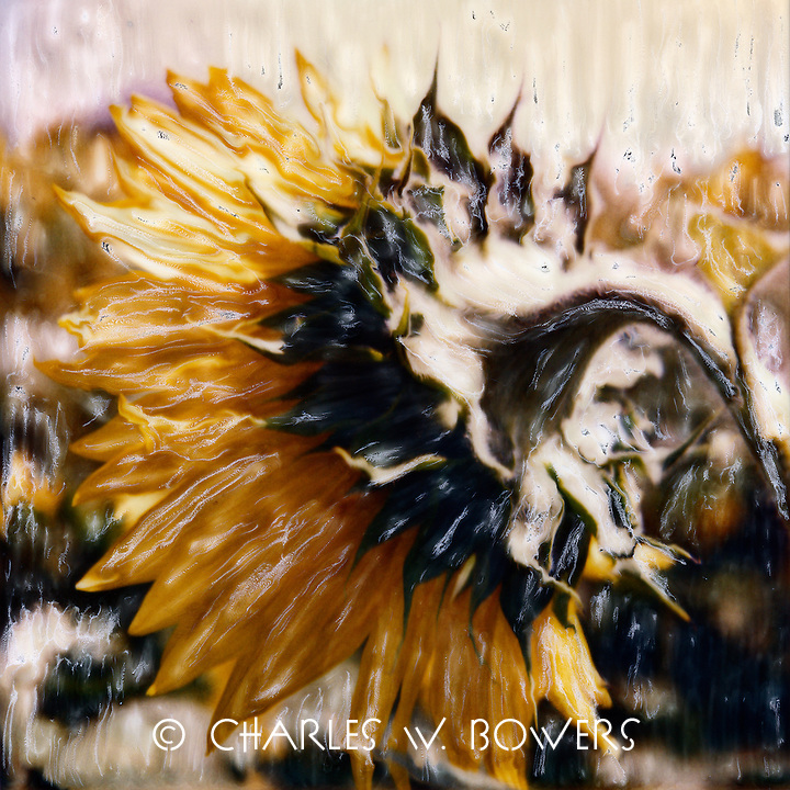 Where most folks don't tend to look on a sunflower. Perhaps you'll take a different look next time?<br />