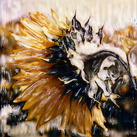 Where most folks don't tend to look on a sunflower. Perhaps you'll take a different look next time?<br /> <br /> -Limited Edition of 50 Prints