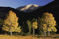 Sunrise over Mummy Range with Aspen trees in fallcolor, Rocky Mountain National Park, Colorado, USA