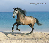 Bob, ANIMALS, collage, horses, photos(GBLASEA0612,#A#) Pferde, caballos