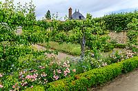 France, Loiret ('(), La Bussière, jardin du château de la Bussière, le potager, vieux poiriers, rosiers et nigelles de Damas