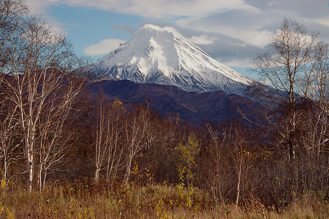 Mixed trees, with a backdrop of Viluchinsky Volcano.  Kamchatka, Siberia, Russia.