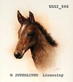 GIORDANO, REALISTIC ANIMALS, REALISTISCHE TIERE, ANIMALES REALISTICOS, paintings+++++,USGI646,#A# horses,