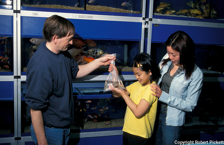 Young Chinese Girl buying goldfish at Fish Shop, with adult, child about 9 years old, pets, aquarium.