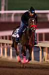 OCT 24: Breeders' Cup Juvenile Fillies entrant Comical, trained by Doug F. O'Neill, gallops at Santa Anita Park in Arcadia, California on Oct 24, 2019. Evers/Eclipse Sportswire/Breeders' Cup