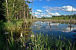 Mazury, 2005-07-02. Zarastające jezioro w okolicach Węgorzewa.