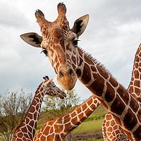 140822_EVE_Dublin_VIP_Zoo