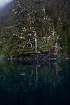 Alaska, Old growth forest, Prince William Sound, Esther Passage, Coastal temperate rain forest,