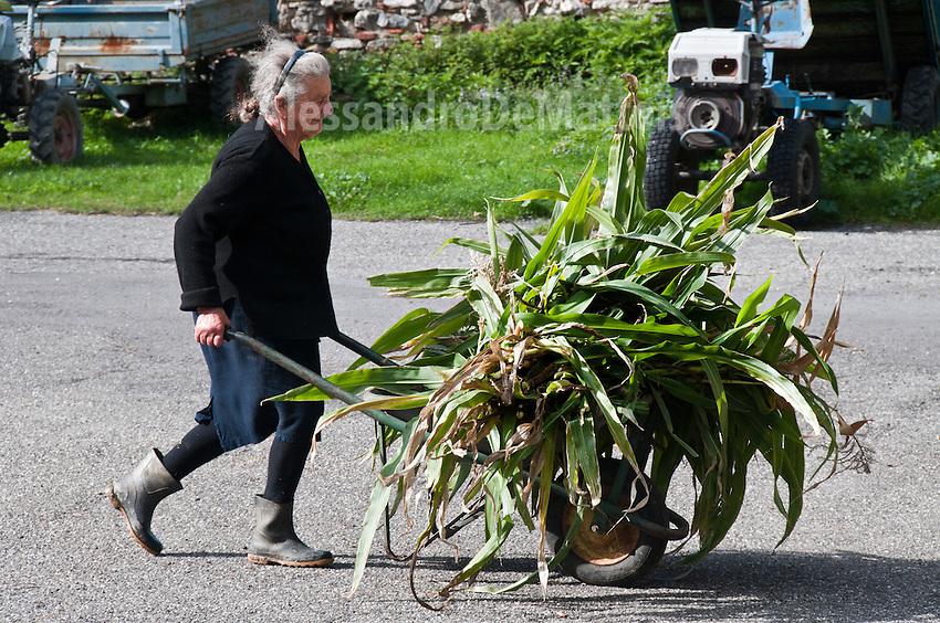 Sagittario.Basilicata 2010 - Vita montana nei pressi dei ruderi dell'Abbazia di Santa Maria del Sagittario, nel territorio di Chiaromonte. Contadina trasporta resti di piante di granturco.