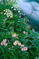 Streamside garden along West Maroon Creek<br />