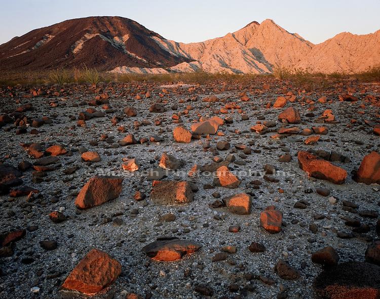 """""""Volcanics in bajada, Lechuguilla Desert Cabeza Prieta NWR  ARIZONA"""""""