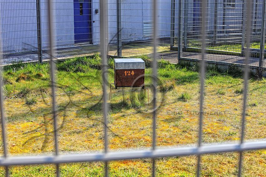 France . Penitentiary of Le Havre, a hive with 40000 bees behind the bars of the recreation area.///France. Centre Pénitancier du Havre, une ruche avec 40000 abeilles dérrière les barreaux de l'enceinte réservée aux loisirs.