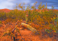 """FALLEN SENTRY""<br />