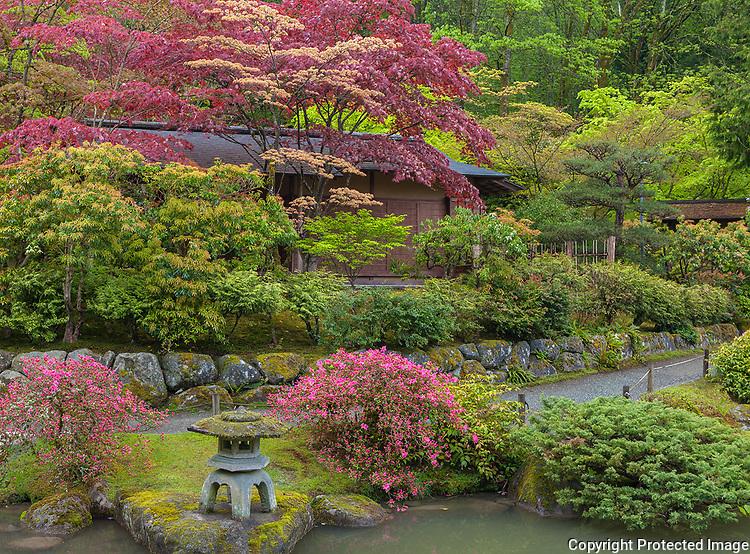 Seattle, WA: Japanese tea house set among spring trees and pathway in the Washington Park Arboretum's Japanese Garden