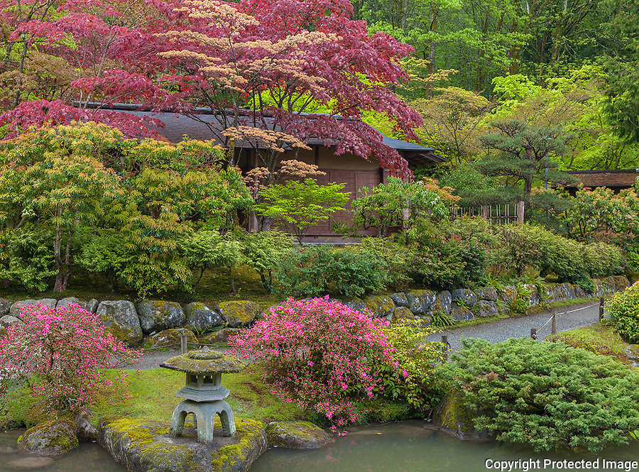Seattle, WA: Japanese tea house set among spring trees and pathway in the Washington Park Arboretum's Japanese Garden