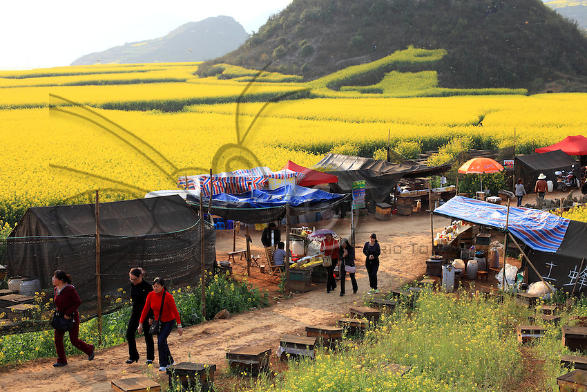 Luoping, Yunnan. Le village de Jinji Lin, sur le chemin qui mène au panorama des collines du coq d'or, des citadines croisent les tentes des apiculteurs. Près de 10 millions de personnes visitent la région de Luoping durant la floraison du colza.///Luoping, Yunnan. The village of Jinji Lin. Tourists from the cities come across the beekeepers' tents on the road leading to the panoramic views from the Hills of the Golden Rooster. Nearly 10 million people visit the region during the flowering of the rape.