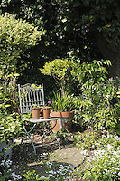 Potted Primulas have been left on the seat of an antique wrought iron chair in this sun-drenched corner of the garden