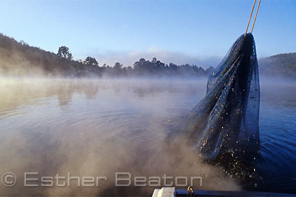 Hauling up full prawn net after trawling, Lower Portland area of Hawkesbury River, NSW. Morning fog and mist over water.