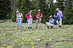 Image taken June 2009 in T17 N, R15 E.  Kittitas County, Washington along trail 966.   Cascadian Club members on hike to Devil's Slide.  Yellow flowers are glacier lilies.